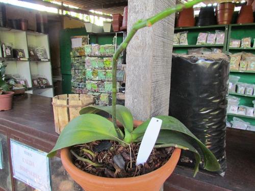 etiqueta modelo e11 para identificação de plantas - 50 und