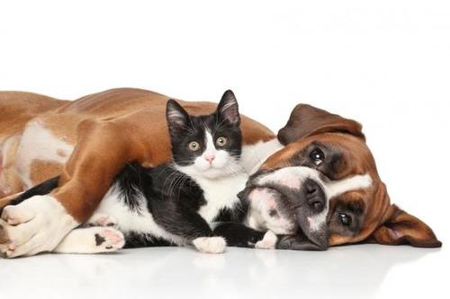 eutanasia y cremación de todo tipo de mascotas.  a convenir