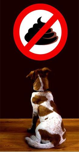 evita que tu perro coma sus heces,coprofagia. pug, yorkie