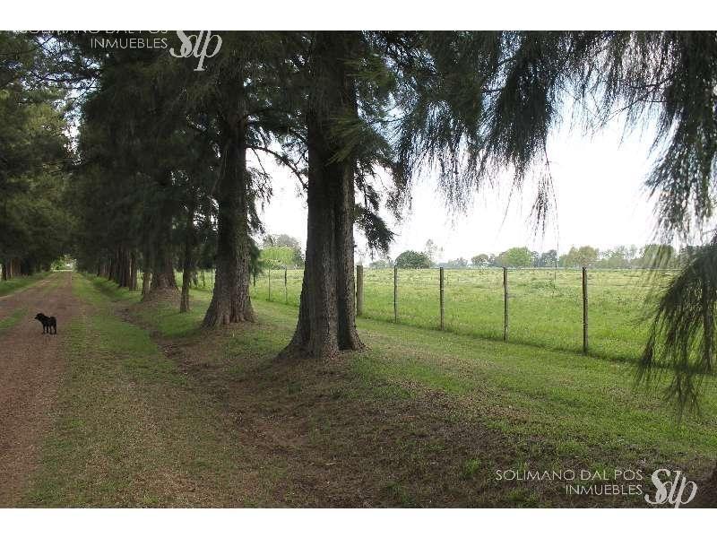 excelente campo de 35 hectáreas en mercedes