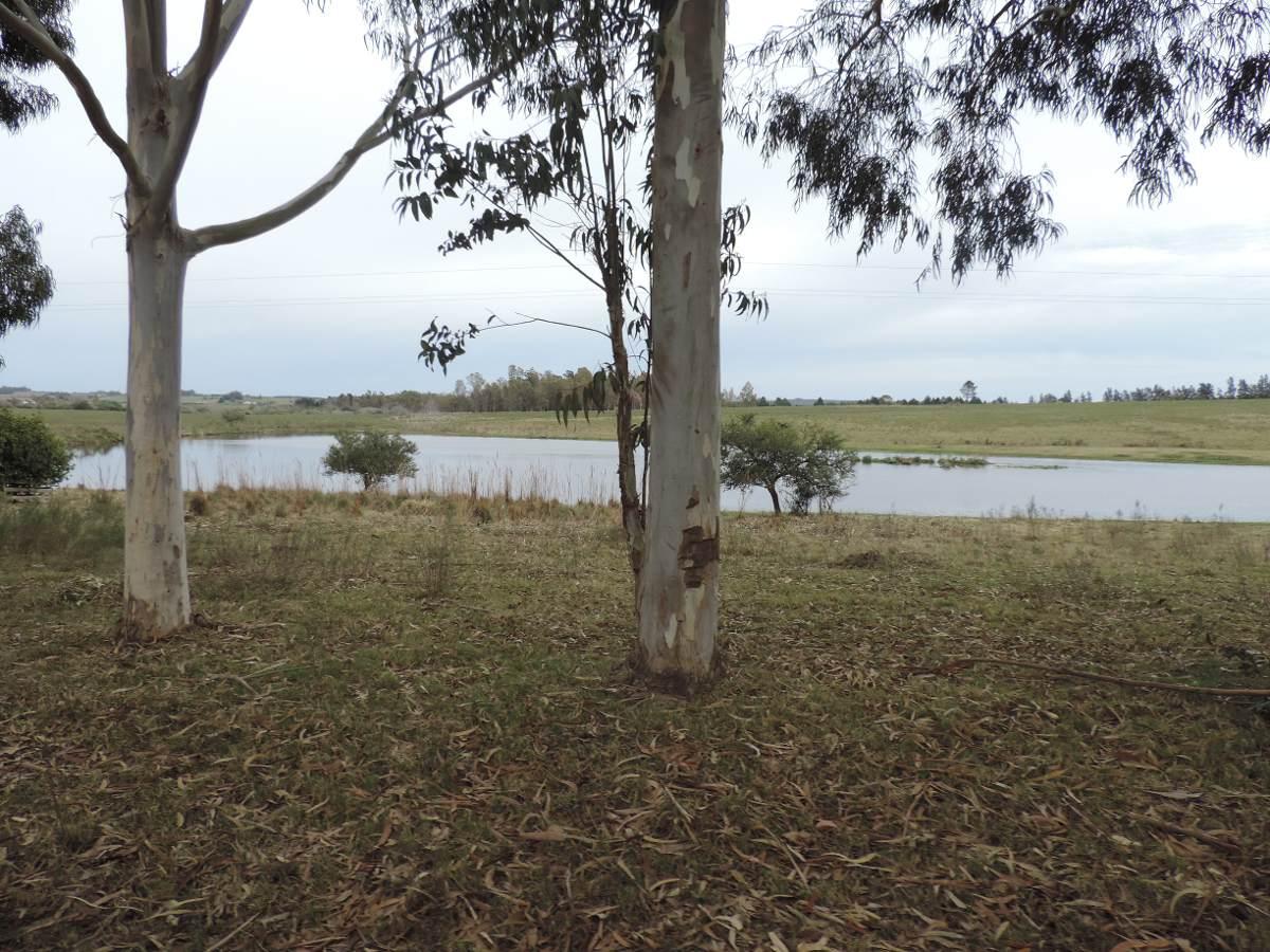 excelente campo de 51 hectáreas sobre ruta 8