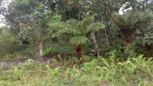 excelente chácara cercada no jardim são fernando - ref 4291