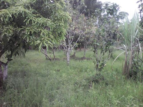 excelente chácara formada por árvores frutíferas - ca266