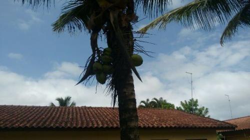 excelente chácara no jardim palmeiras, itanhaém!!!