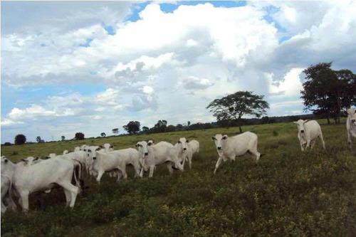 excelente fazenda