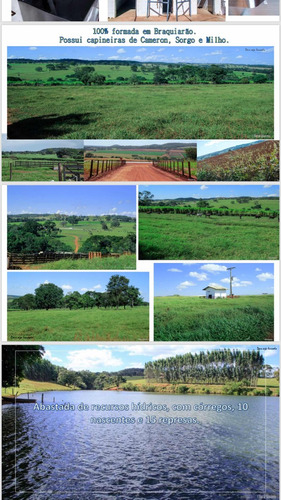 excelente fazenda com laticinio no goiás