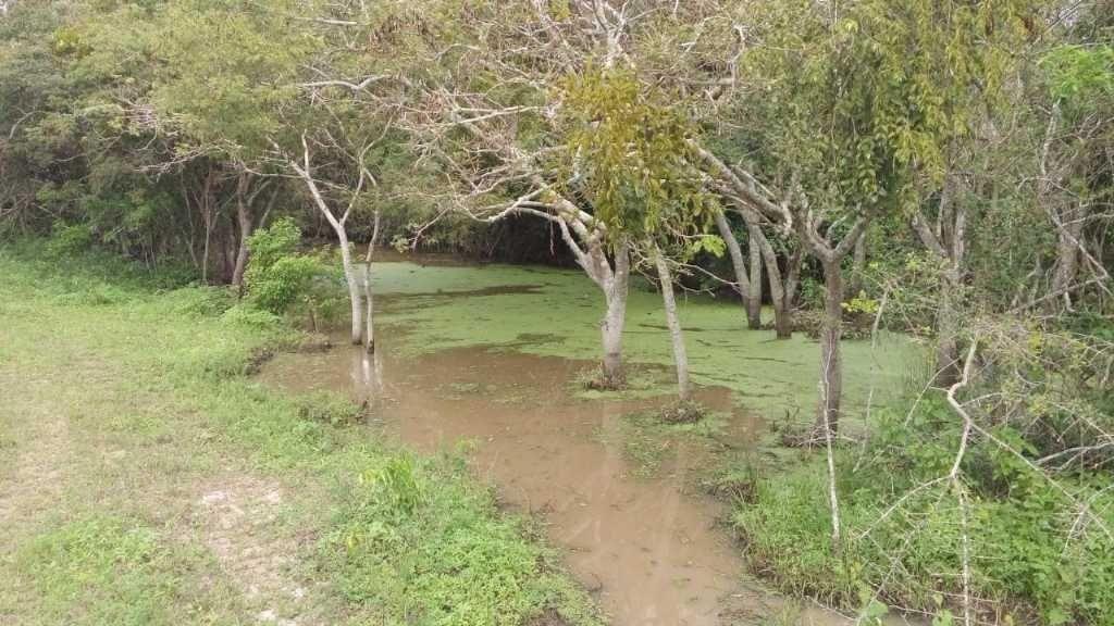 excelente fazenda em feira de santana-ba - 1244