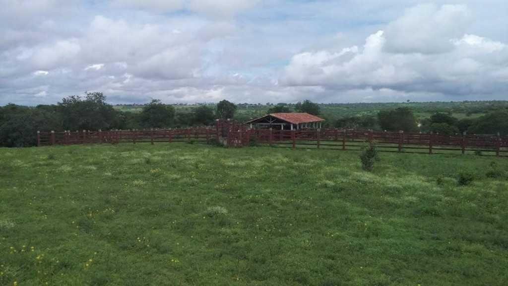 excelente fazenda em feira de santana-ba - 7427