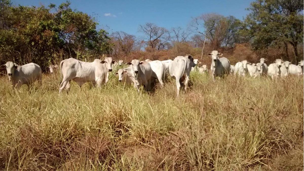 excelente fazenda município de iaciara  goiás