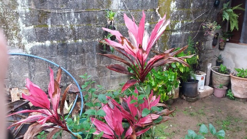 excelente imóvel no jardim palmeiras, em itanhaém - ref 3217