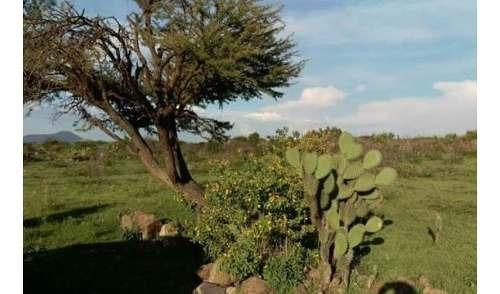 excelente inversion! venta de terreno ubicado en san rafael corregidora