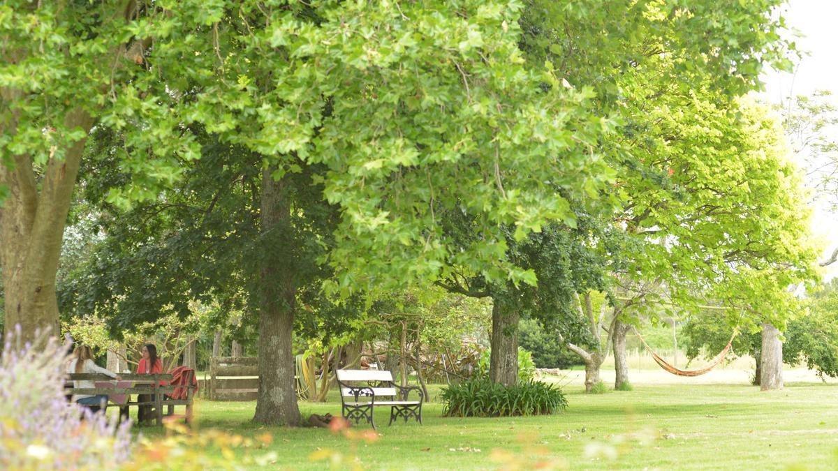 excelente lote en san juan chico fondo verde- un solo vecino