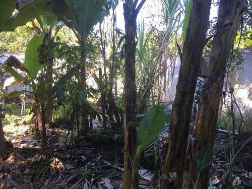 excelente mini-chácara no jardim palmeira - ref 4255