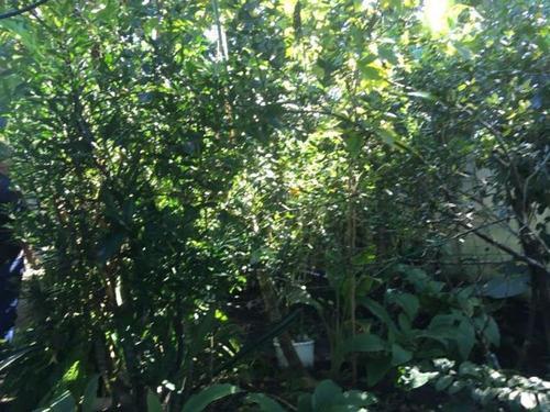 excelente mini-chácara no palmeiras - itanhaém 4255   p.c.x