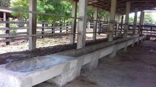 excelente rancho ganadero en venta en sucila yucatan