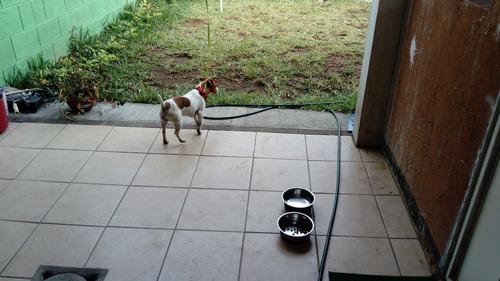 excelente servicio de hospedaje para mascotas (sin jaula).