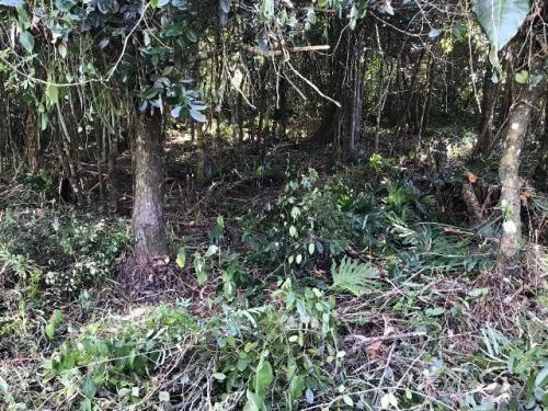 excelente terreno de chácara em itanhaém - sp