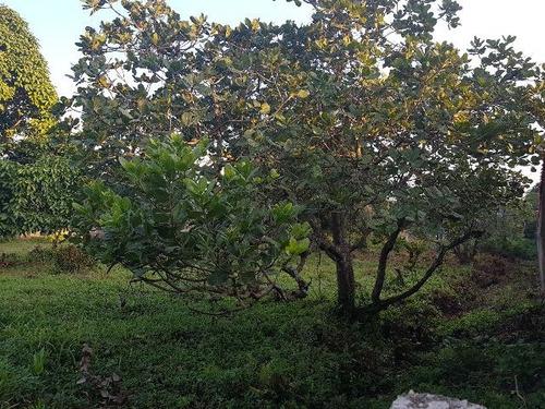 excelente terreno de chácara no balneário gaivota - ref 4320