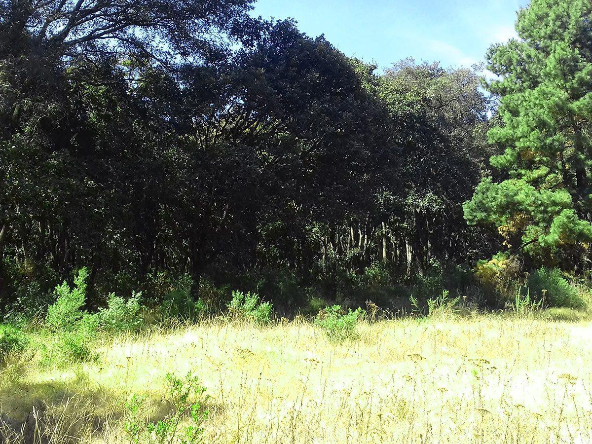 excelente terreno en cahuacán, romero rubio
