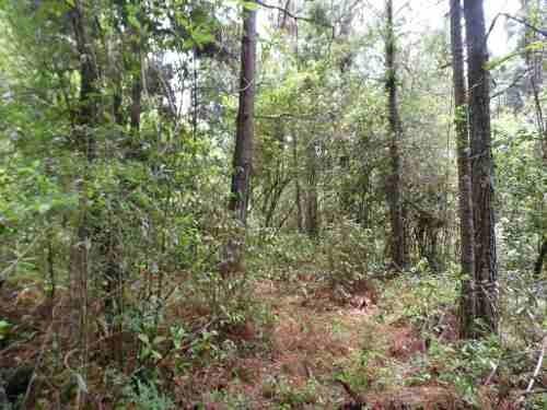 excelente terreno en entorno de bosque