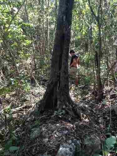 excelente terreno en ruta de los cenotes puerto morelos c2267