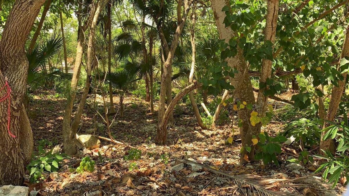 excelente terreno en venta en quintana roo
