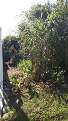 excelente terreno no jardim regina em itanhaem!!!