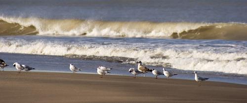 excelente ubicación: a pasitos del mar. lote en la caleta