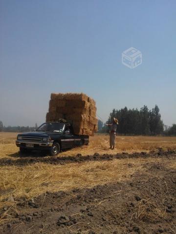 excelentes fardos de paja de trigo