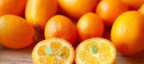 excelentes mudas de laranja kinkan enxertada !