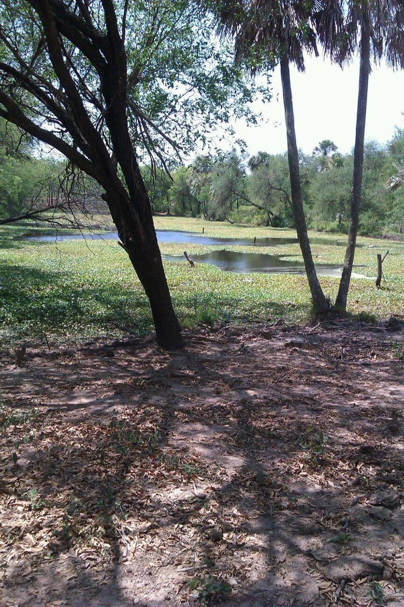 exelente campo en paraguay,ideal inversor