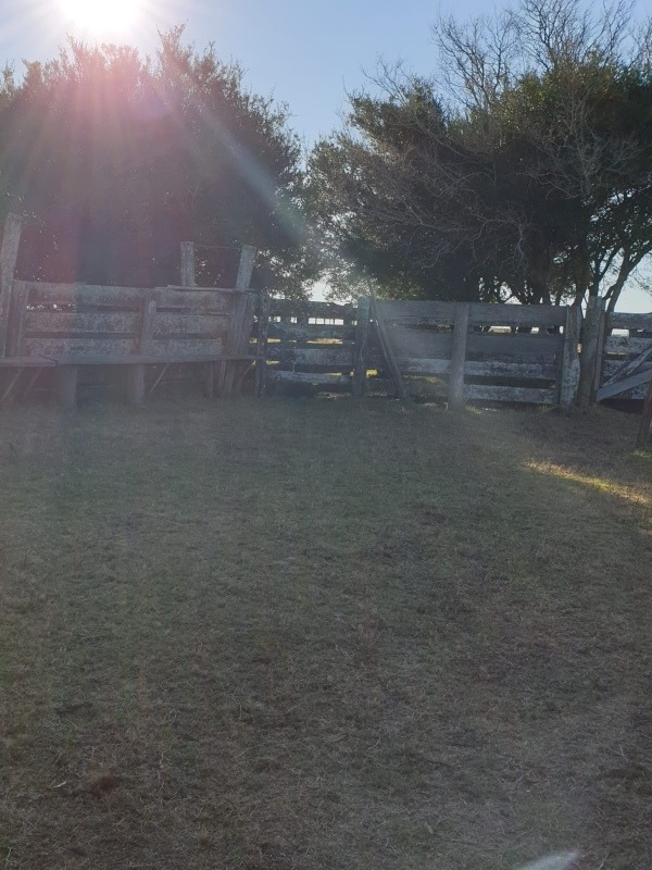 exelente campo invernador