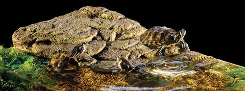 exo terra turtle island bank ilha flutuante tartarugas g