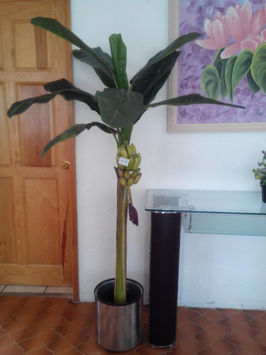 Expectacular palmera banano maa 3 en mercado libre for Palmeras decorativas exterior