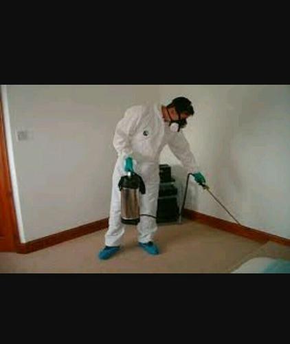 expertos en control de toda clase de plagas las 24 horas