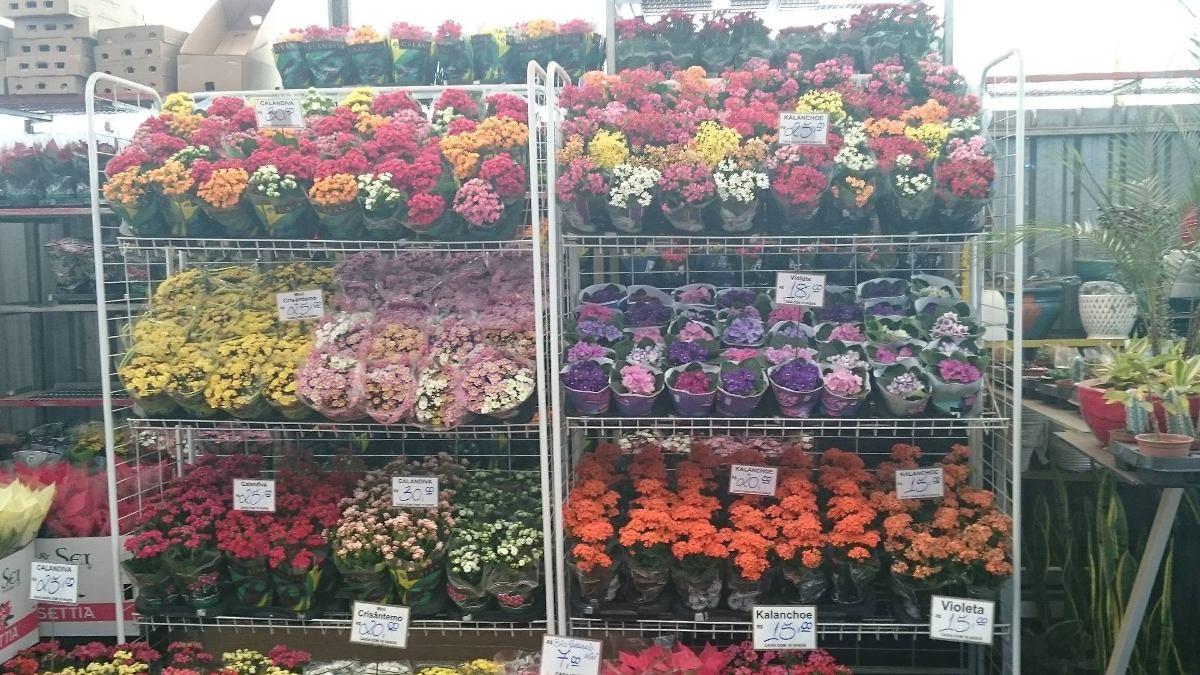plantas de jardim lista:Expositor De Flor E Planta Ornamental Regulável/desmontável – R$ 500
