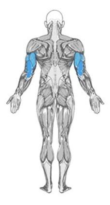 extensor puxador triceps biceps remada multi funcional