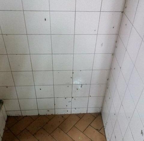 exterminio y control de plaga eficaz chiripa cucaracha insai