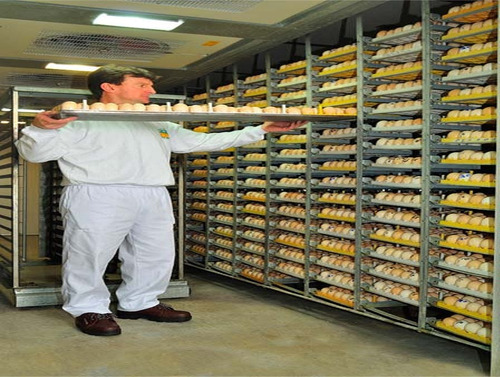 fabricación de incubadoras para pollos