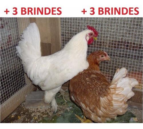 fabrique rações para frangos de corte e galinhas poedeiras