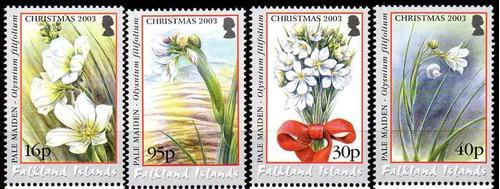 falkland is./ malvinas 2003. natal. flores (4)