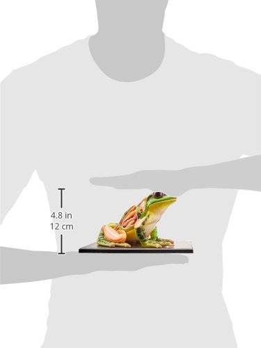 Fame Master Modelo 4d De Anatomia De Una Rana - $ 145.900 en Mercado ...