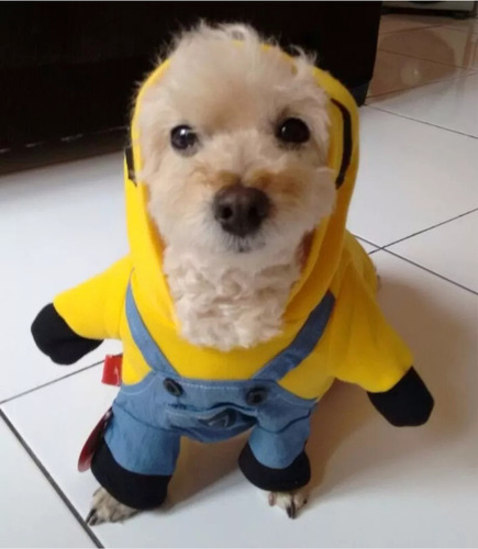fantasia cachorros roupa