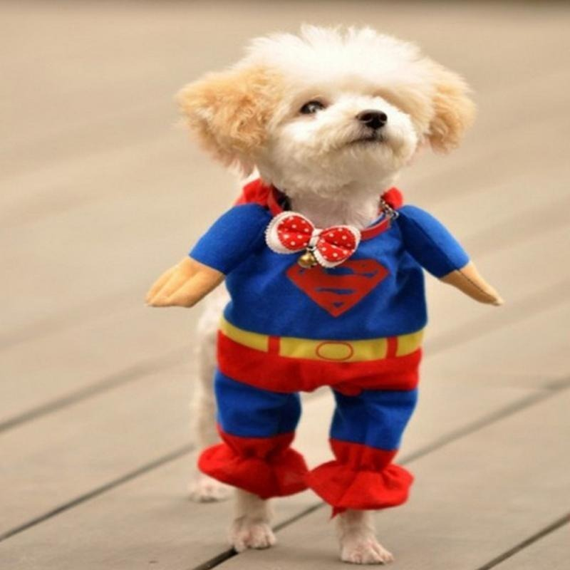 8b195d05b98408 Fantasia Roupa Para Cachorro Gato Pet Super Homem