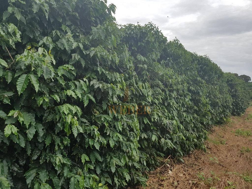 fantástico sitio com produção de café e milho - coqueiral mg - si0002