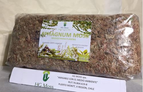 fardo de 150 gramos sphagnum moss, musgo chilote, pon pon
