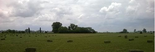 fardos y rollos de alfalfa pura