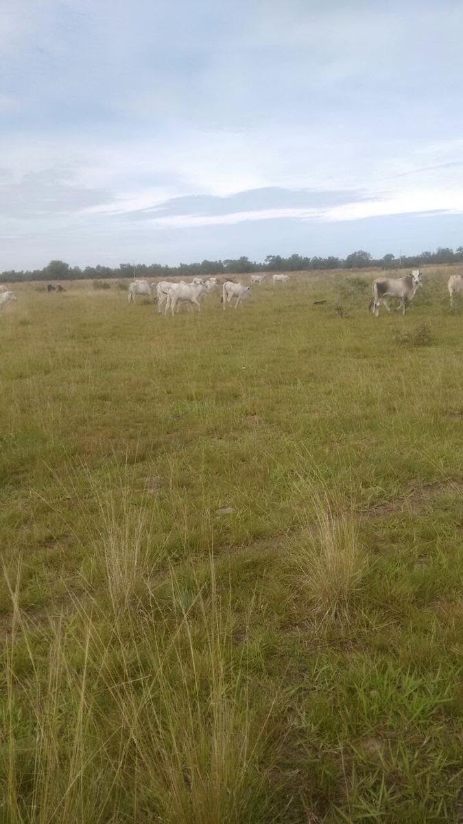 fazenda a venda  de 11.000 hectares em coxim - ms (pecuária) - 759