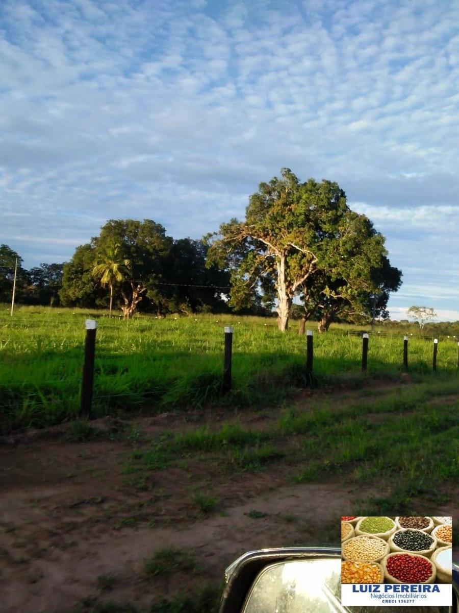 fazenda a venda de 113 alqueirões em gurupi - to (pecuária) - 1323