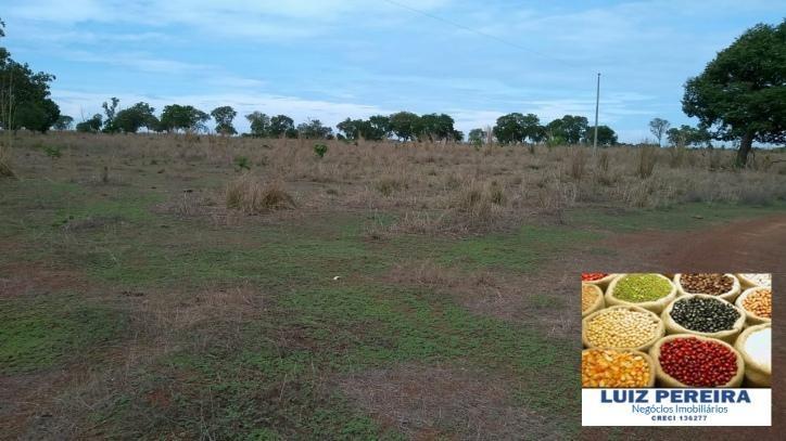 fazenda a venda  de 50 alqueirões em gurupi - to (dupla aptidão) - 893